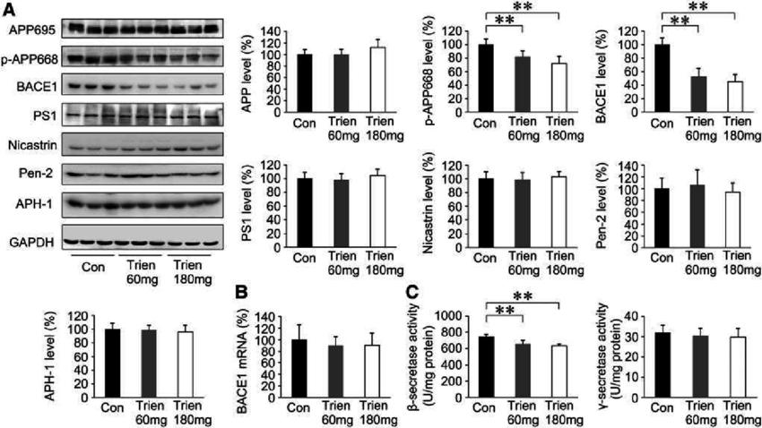 Effects of Trien on b-secretase and c-secretase in the APP