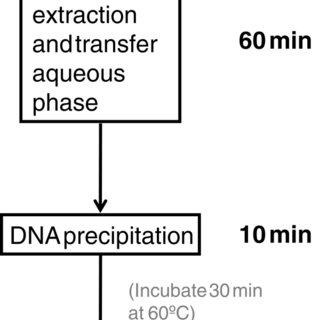 Flowchart of five major steps of the DNA extraction method