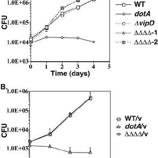 VipD protein is induced in postexponential phase. The