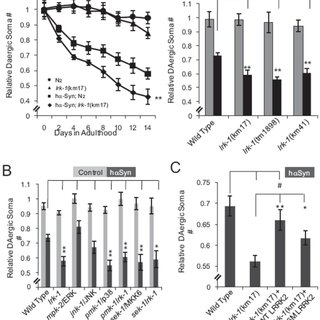 (A) 6-OHDA induces two peaks of p38 phosphorylation and