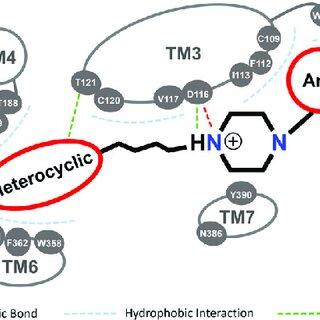 (PDF) Revealing Vilazodone's Binding Mechanism Underlying
