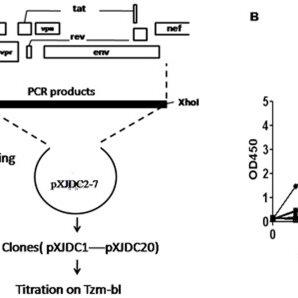 (A) Diagram of the full-length molecular cloning method