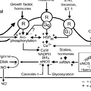Schematic of possible mechanisms by which production of