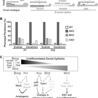 Effects of Alk3 depletion on expression of differentiation