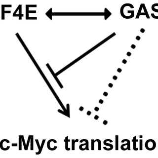 (A) GAS5 mRNA was detected by RT-PCR after RNA-IP using