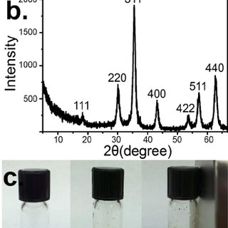 (a) Western blot analysis showing the speci fi city of