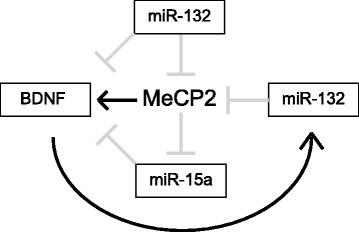 MeCP2 participates in homeostatic feedback loops involving