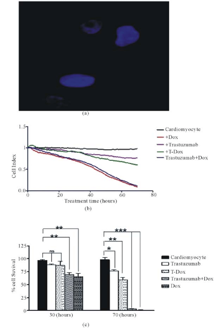 hight resolution of t dox binding and its effects of cell viability of human cardiomyocytes download scientific diagram