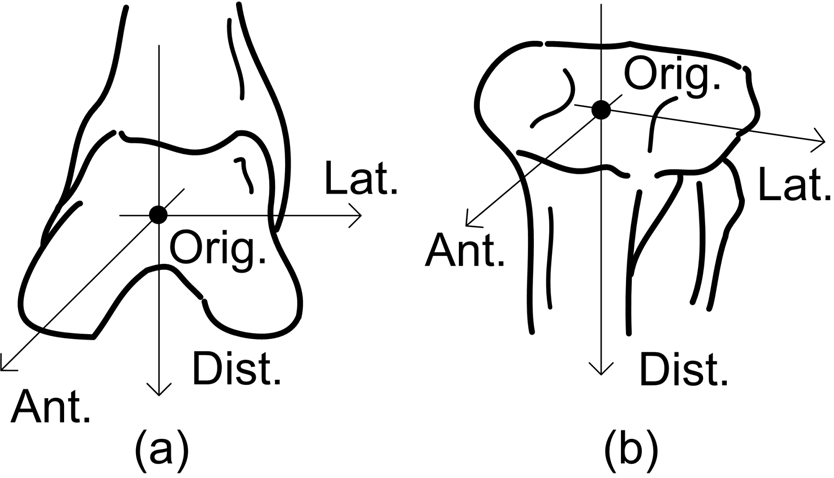 Fig. 3. Joint coordinate system defined in each bone: (a