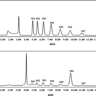 HPLC analysis of the product of the action of rAmyM from