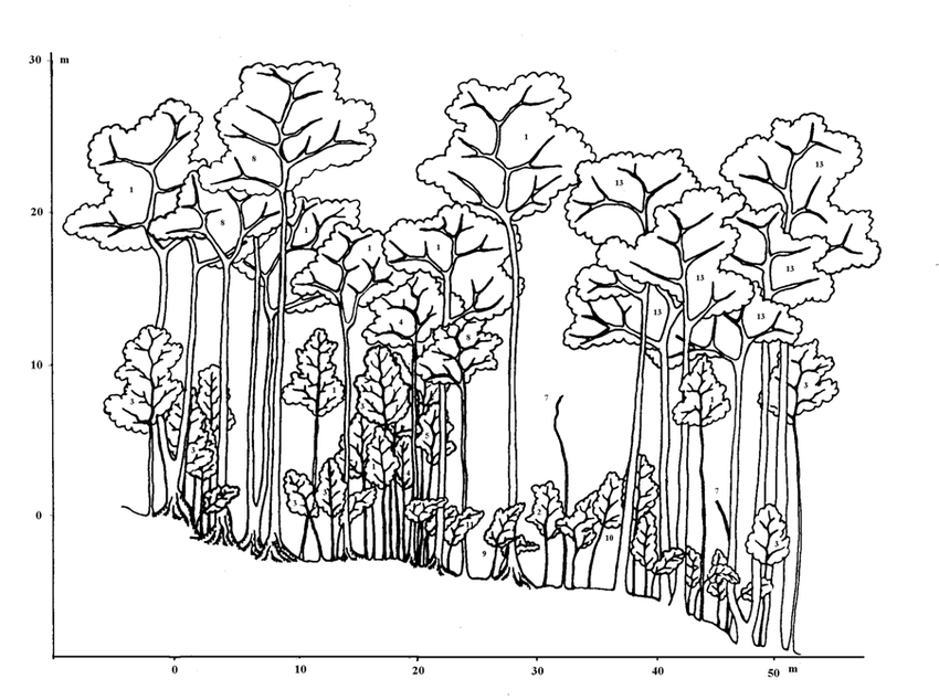 Profile diagram of the tropical seasonal rain forest in