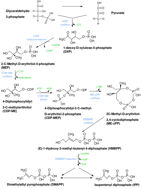 small resolution of mep biosynthetic pathway