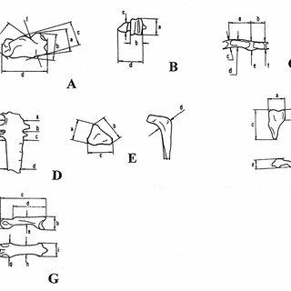 (PDF) An Early Pleistocene Snake Eagle, Circaetus