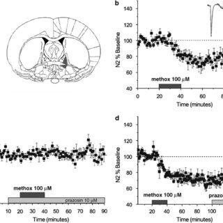 (PDF) 1-Adrenergic Receptor-Induced Heterosynaptic Long
