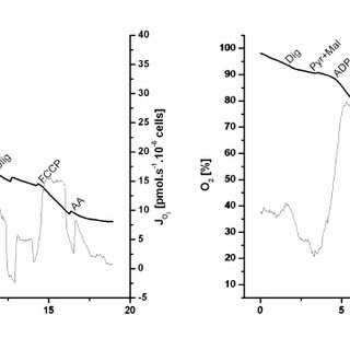 Oxygen consumption by intact cells in culture medium