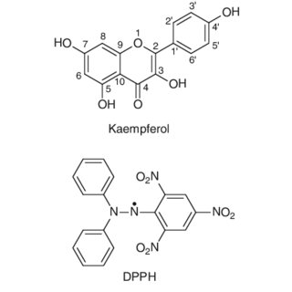 (PDF) Oxidation of kaempferol and its iron(III) complex by