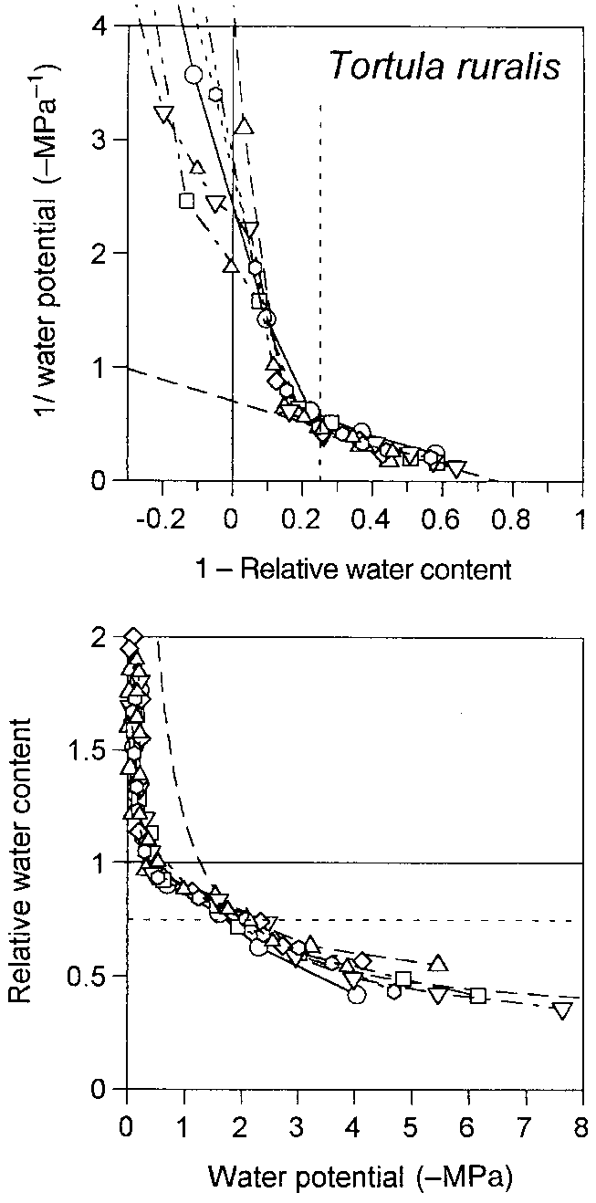 hight resolution of p v and rwc y curves for polytrichum commune 3 replicates fig