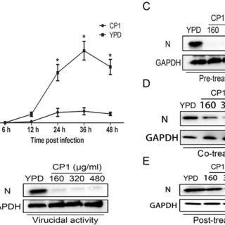 Antiviral mechanism of GBVA10-9. (A) GBVA10-9 (2  M) and
