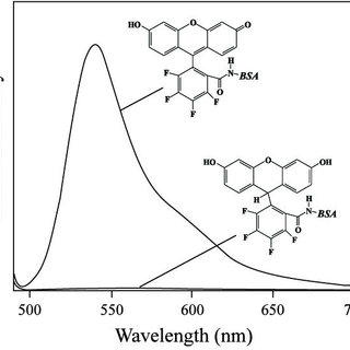 The effect of H2O2 and O2- on the fluorescence of