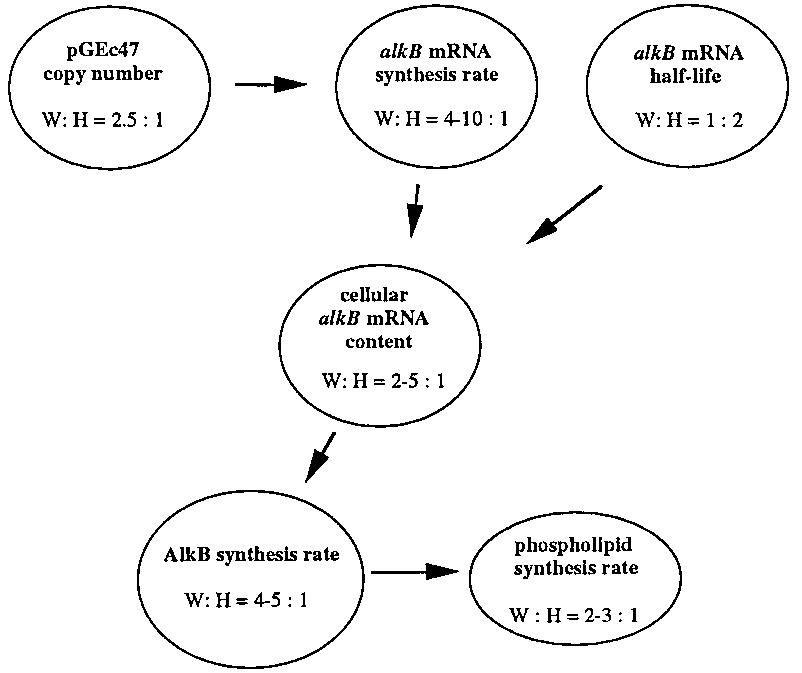 Determinants for alkB expression in alk E. coli. W, W3110