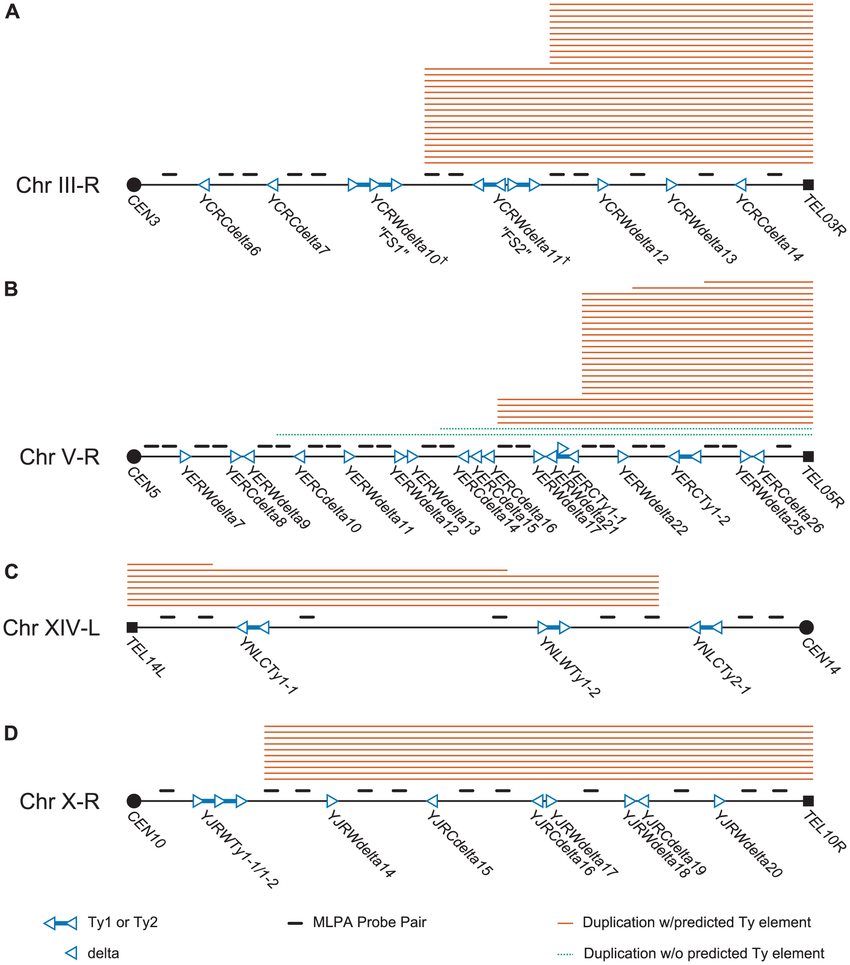 medium resolution of schematic of mlpa probes designed for hotspot chromosome arms and mlpa data generated from gcr