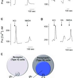 presynaptic type iii taste bud cells respond to glutamate kainic acid ka [ 850 x 1393 Pixel ]