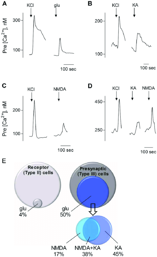 small resolution of presynaptic type iii taste bud cells respond to glutamate kainic acid ka