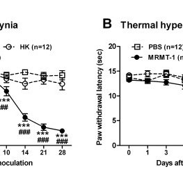 Changes in TRP channels produced by inflammation
