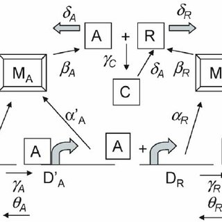 (PDF) The Transition between Stochastic and Deterministic