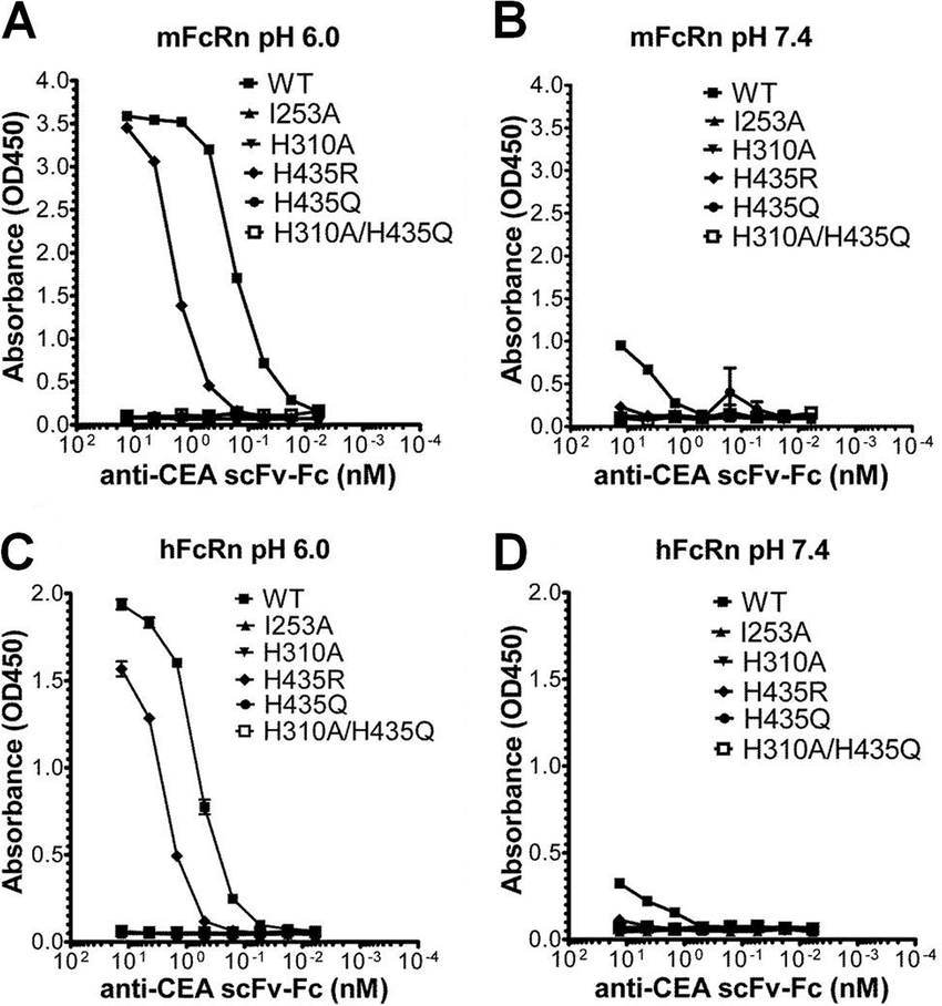 ELISA measurements of pH-dependent binding of mFcRn and