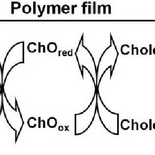 The chronopotentiometry of the poly(3-TPAA) film