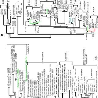 (PDF) Pitfalls of Establishing DNA Barcoding Systems in