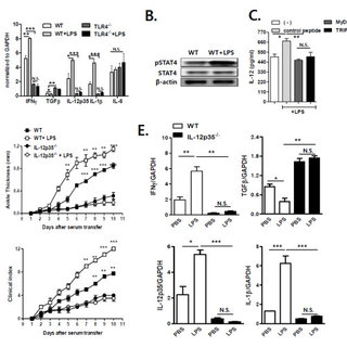 (PDF) TLR4-mediated IL-12 production enhances IFN-γ and IL