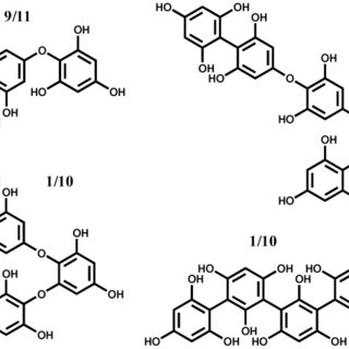 Phlorotannin Extracts from Fucales Characterized by HPLC