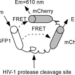 (PDF) Enhancement of Probe Signal for Screening of HIV-1