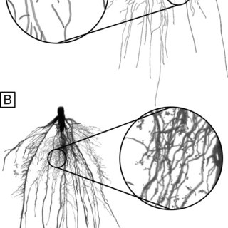 Local analysis of soil root interactions.A. Evolution of
