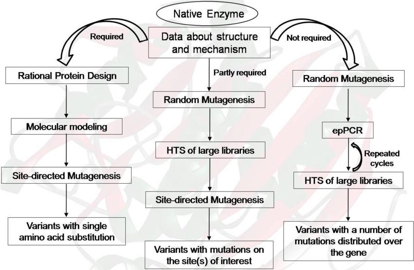 Schematic representation of protein engineering strategies
