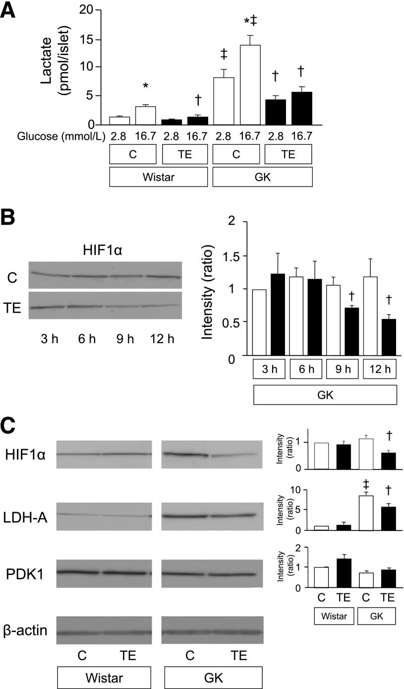 Effects of TE treatment on lactate production and HIF1α