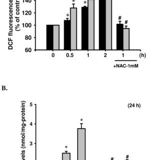 (PDF) Cadmium Induces Apoptosis in Pancreatic β-Cells