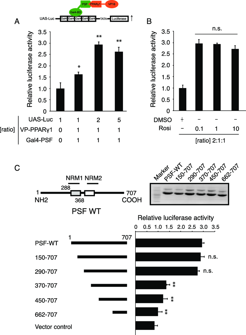 The first central region of the nucleotide-binding domain