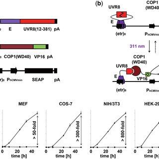 (PDF) Multi-chromatic control of mammalian gene expression