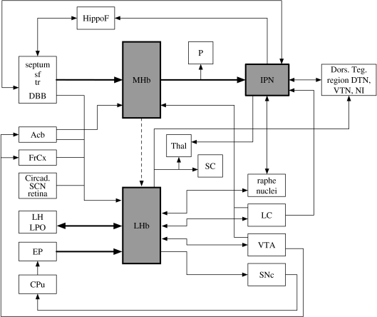 Connectivity of the DDC. This schematic shows the