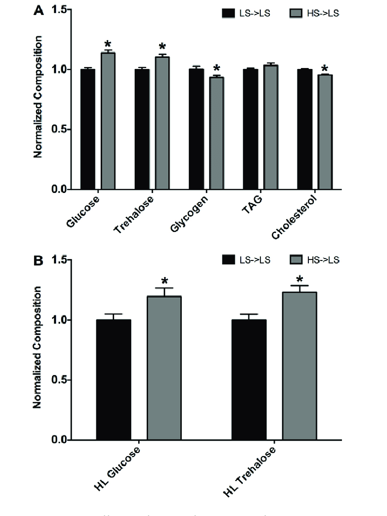 hight resolution of male larval offspring from hs fed maternal flies have altered body composition and circulating sugar