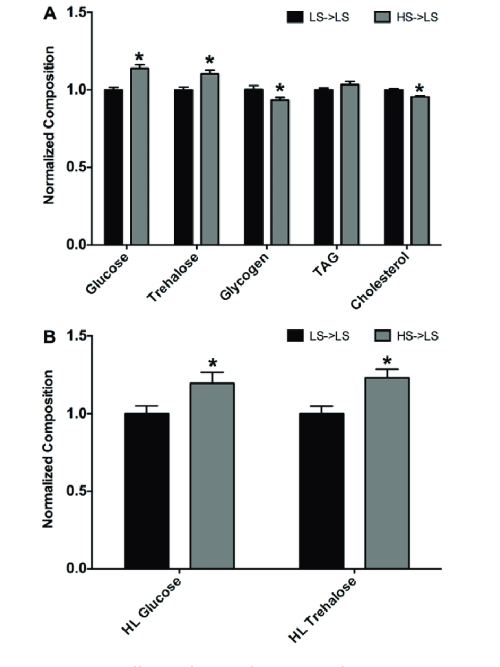 small resolution of male larval offspring from hs fed maternal flies have altered body composition and circulating sugar
