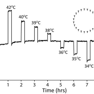 (PDF) DNA Hairpins as Temperature Switches, Thermometers