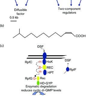 (PDF) Cyclic di-GMP signalling and the regulation of