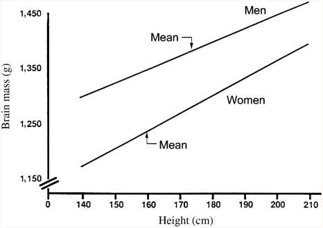 The relation between brain mass and body height in White