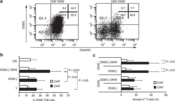 CD56+ cytokine-induced killer (CIK) cells are terminally