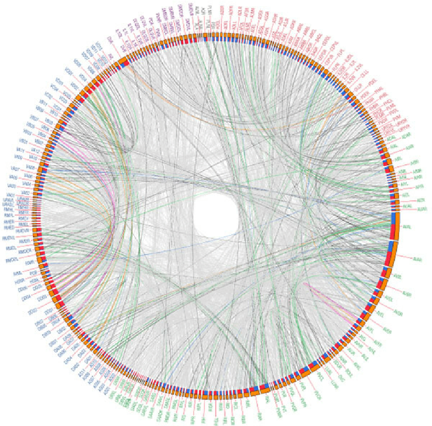 Directed Circular Wiring Diagram Of The C Elegans Combined Network