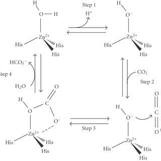 Hydrolysis reaction of para-nitrophenylacetate (p-NPA) to